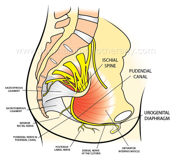 ischial tuberosity Anatomy, Location, Pain, Treatment